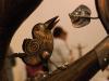 птах Олександра Ковальчука