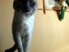 Нерукотворний кіт