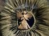 Янгол з соломи від родини Марії Кравчук