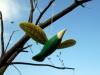 Птахи Івана Приходька