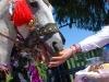 Пригощання отримала й коні