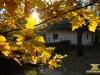Крізь листя