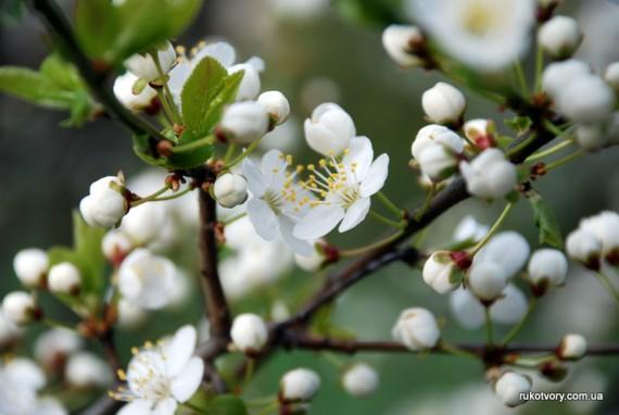 ...радіючи Христовому Воскресінню та весні