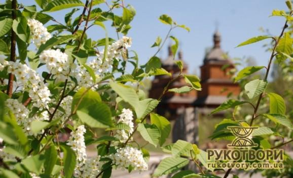 «День цвітіння черемхи» на Мамаєвій Слободі