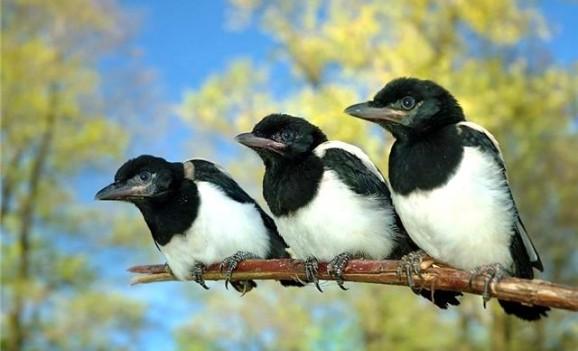 Пташки з тіста, сіна, ниток та в розписі – весняні майстер-класи