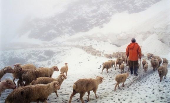 Красиве і тяжке життя пастухів на полонинах України та Грузії