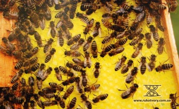 Від бджоли до меду. Бачення Миколи Журавля